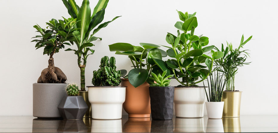 چگونه گیاهان را در آپارتمانها پرورش دهیم؟